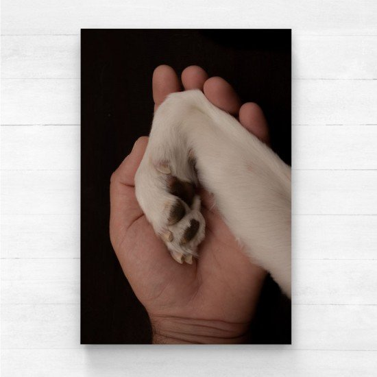 Hugging the dog paws - Canvas Print